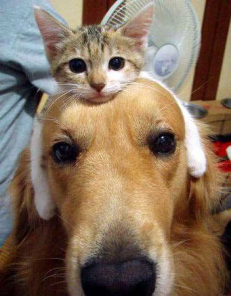 kitten, cat, dog, friendship,